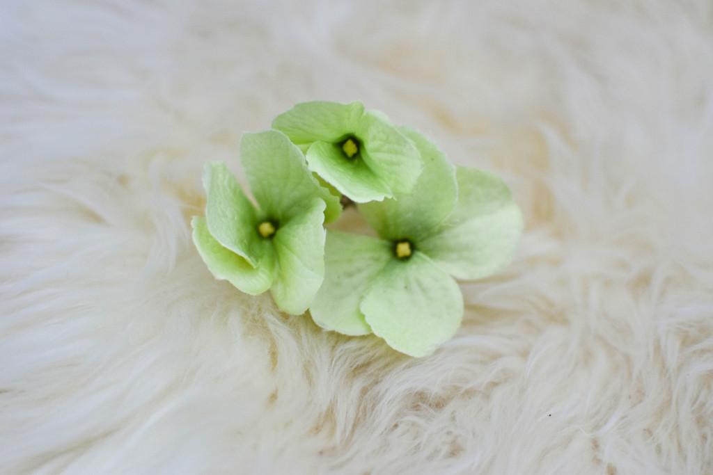 Flower Headband (20 of 13)